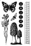 Nature Walk - Clear Stamps